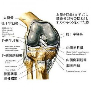 膝20110102_1665726